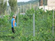 inspection of vines